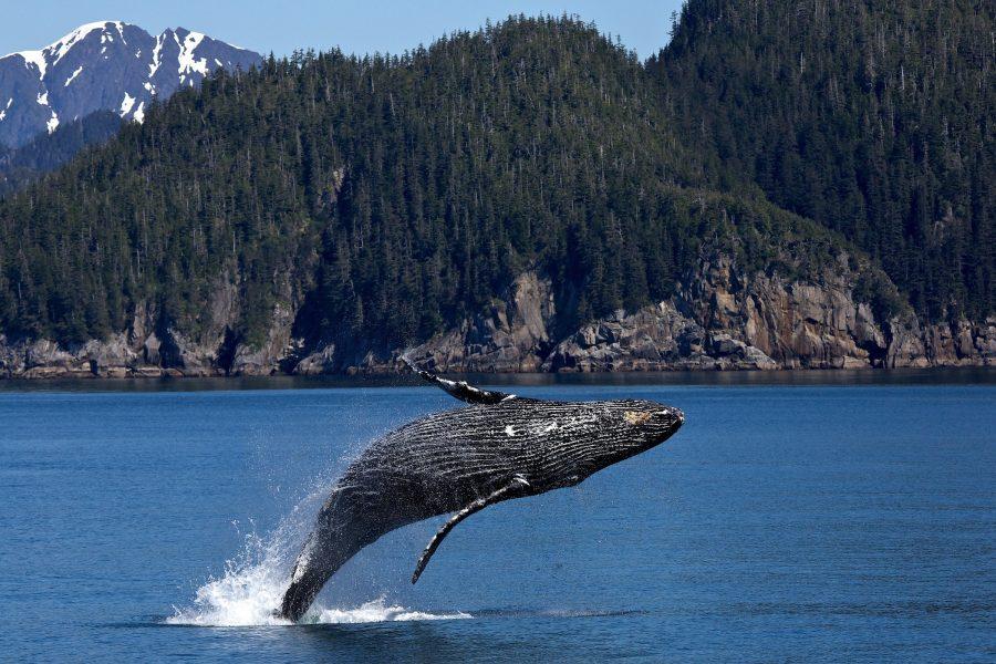 Le sénateur Harder veut protéger les requins et les baleines en captivité grâce au projet de loi du gouvernement sur les pêches