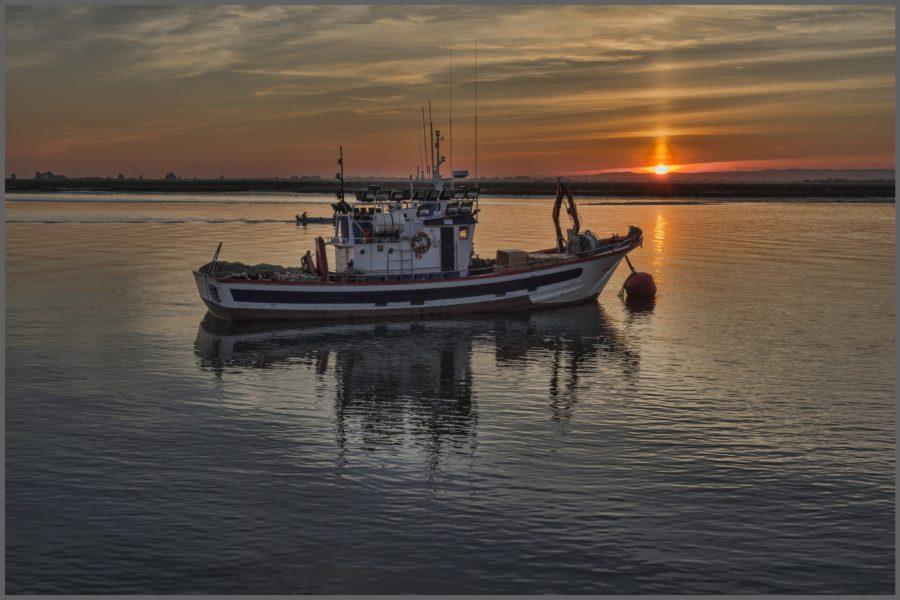 Débat au Sénat d'un projet de loi visant à protéger les pêches du Canada
