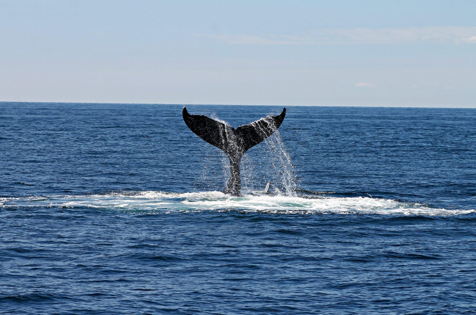 Un projet de loi visant à mieux protéger les océans est adopté au Sénat