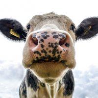 Le Sénat adopte un projet de loi d'aide au secteur laitier